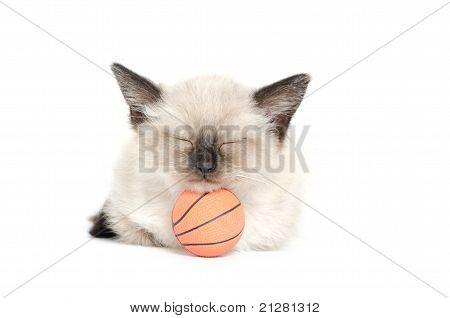 Sleeping Kitten And Basketball