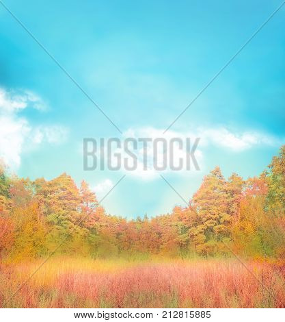 Gold Autumn With Blue Sky.  Autumn Background With Open Space.
