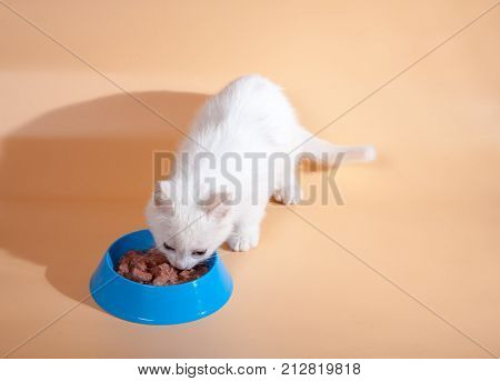 a little white cute kitty eats cat food with an appetite from a cat's bowl on a homogeneous light background