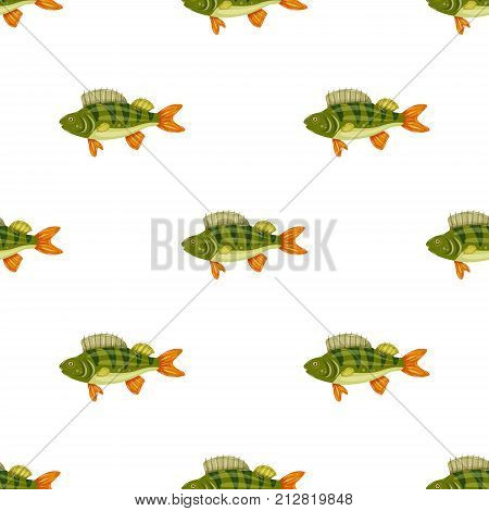 Seamless pattern freshwater flat colorful perch fish isolated on white background. Marine fresh food.