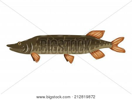 Freshwater flat icon colorful perch fish isolated on white background. Marine fresh food logo, fishing sport.