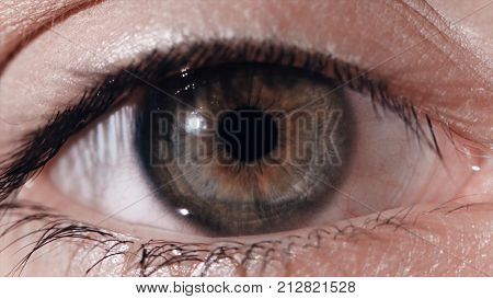 Close-up of a beautiful young woman's green eye. Close-up of green human eye. green eye very closer. Human eye, macro shooting HD