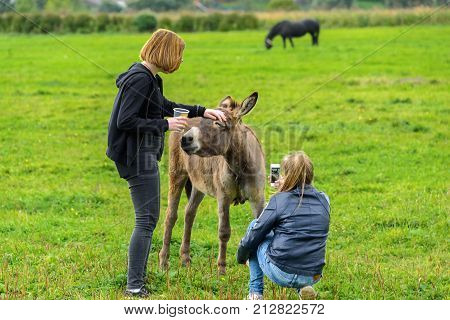 Girls feed the donkey on a green lawn and photograph it. Suzdal Russia 2017