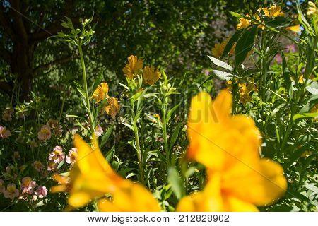 A beautiful day at Wollongong Botanic Gardens