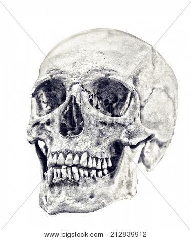 single skull isolated on white background