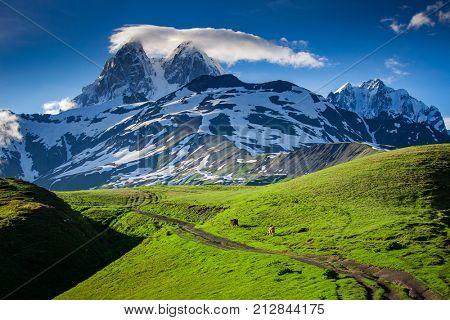 Panoramic summer landscape with Ushba mountain snowy peak. Main Caucasian ridge, Zemo Svaneti, Georgia. Green hills and mountain trekking trail in Caucasus foothills.