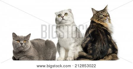 Group of cats sitting and lying