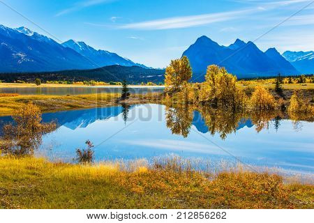 Sunny autumn day in the Rocky Mountains of Canada. The mirror surface of the fantastic Abraham lake reflects light clouds and trees. The concept of ecological and active tourism