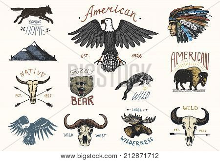 set of engraved vintage, hand drawn, old, labels or badges for camping, hiking, hunting with boar, bear and wolf, red fox . skull and bald eagle, moose face, indian or native american. buffalo.