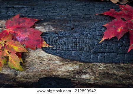 Burned And Charred Log Detail Background With Several Leaves