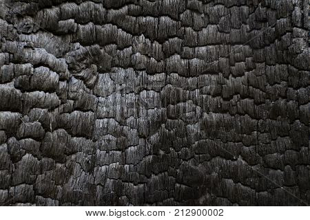 Charred Black Wood Log Interior Burned In A Forest Fire, Horizontal Aspect