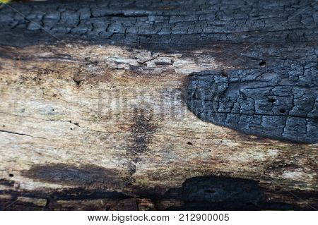 Charred Log Detail Blackened By A Forest Fire, Horizontal Aspect