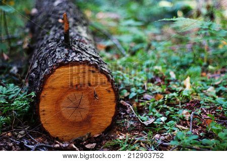 A felled tree in the forest, nature