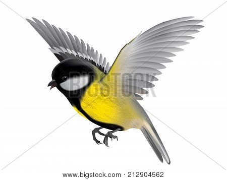 Bird titmouse detailed illustration for your projects