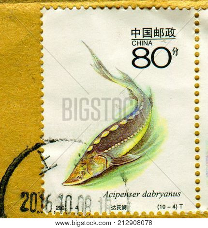 GOMEL, BELARUS, 27 OCTOBER 2017, Stamp printed in China shows image of the Dabry's sturgeon (Acipenser dabryanus) is a species of fish in the sturgeon family, Acipenseridae, circa 2001.