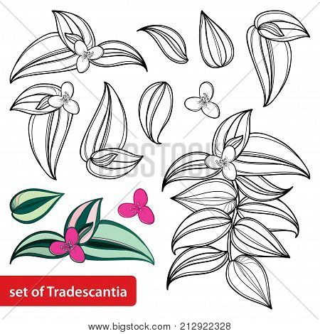Vector Set Outline Vector & Photo (Free Trial) | Bigstock on sanguineum plant, iresine plant, traveling jew plant, sedum plant, vriesea plant, rubra plant, kalanchoe plant, purple wandering jew plant, wandering jude plant, oxalis plant, walking jew plant, zebra plant, wandering jew house plant, creeping fig plant, rhoeo plant, codiaeum plant, balloon plant, philodendron plant, schefflera plant,