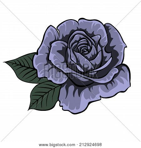 Blue rose. Colored and lined rose flower. Isolated rose. Single rose
