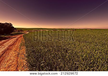 Countryside with green field and rural curving road in Israel. Early spring in fields in southern Israel at sunset