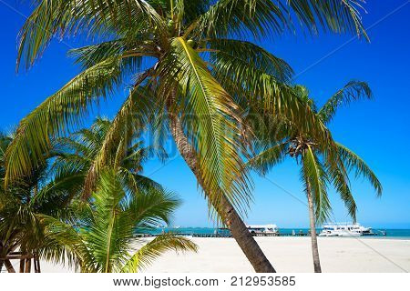 Cancun Playa Langostas beach Pal trees in Hotel Zone of Mexico poster