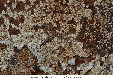 Background texture of Rusted steel Grunge real photo