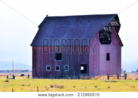 Forgotten landscape including a large collapsing abandoned wooden barn taken at a rural field on a prairie