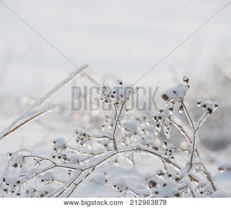 seeds and dry grass covered with ice against a background of snow on a sunny day