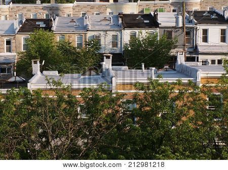 Looking out and down across the tops of several rows of old fashioned rowhouse rooftops the city of Baltimore in the springtime with fresh green tree tops interspersed.