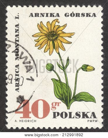 MOSCOW RUSSIA - CIRCA OCTOBER 2017: a post stamp printed in POLAND shows Mountain arnica flowers the series