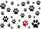 white background with black and one red paws poster