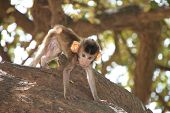 A picture of Long-tailed Macaque on the tree in forest park. poster
