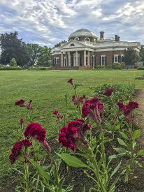 red flowers at Thomas Jefferson home; Monticello, Virginia