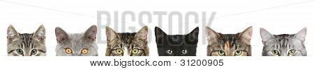Cat's half heads on a white background poster