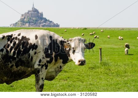 Cow standing in front of Mont St.