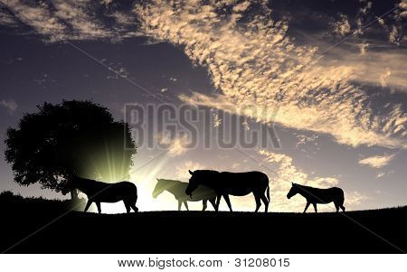 Picture of african animals in savannah at dawn
