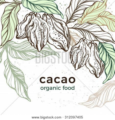 Cacao Template. Vector Nature Background. Art Hand Drawn Botanical Tree, Bean, Tropical Fruit, Leaf.