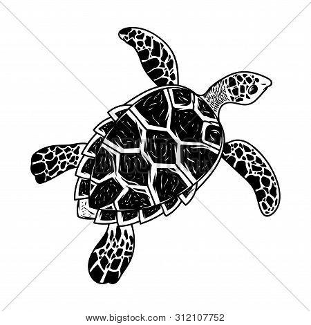 Big Sea Ocean Wild Animal Turtle Slow Swim Monochrome Drawing Graphic Style Cartoon Character Vector
