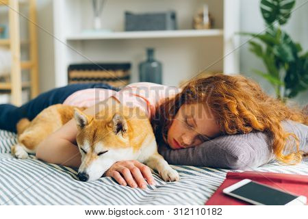 Pretty Teenage Girl Is Sleeping At Home Hugging Adorable Shiba Inu Dog In Sleep Lying On Couch In Ap