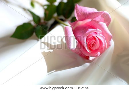 Pink Rose On Satin