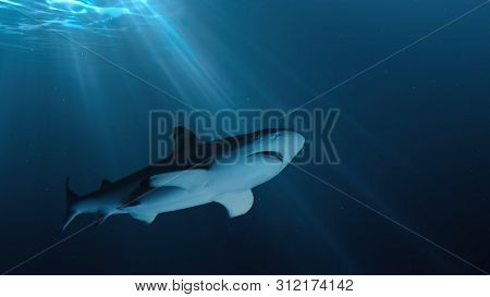 Big Shark Is Swimming Underwater In Ocean.
