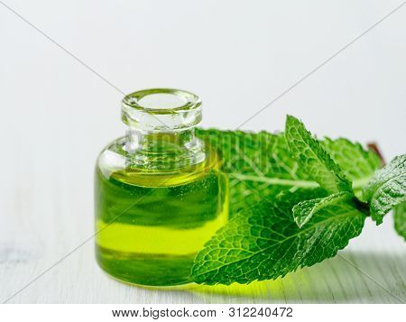Organic Essential Mint Oil Or Melissa Oil With Green Leaves Of Mint. Mint Melissa Oil On White Woode