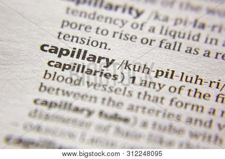 Word Or Phrase Capillary In A Dictionary