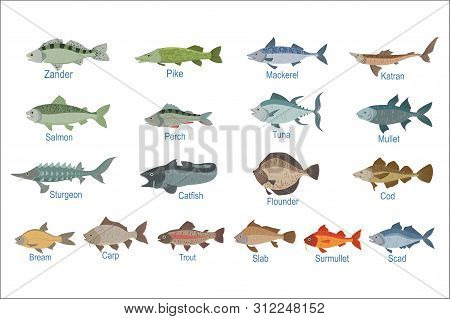 River Fish Identification Slate With Names. Realistic Infographic Illustration In Simple Style