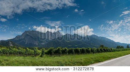 Panorama Mountain Landscape In Switzerland With Many Rows Of Pinot Noir Grapevines In The Foreground