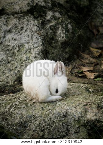 White Cute Little Rabbit