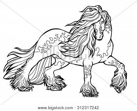 Horse Runs Trot. Coloring Book. The Horse Runs Trot. Coloring Book. Tinker Is A Thoroughbred Horse.
