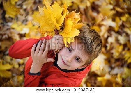 Cute Boy With A Bouquet Of Autumn Leaves Stands And Looks Up. Top View. Autumn Concept