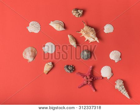 Pattern From Variety Of Seashells On The Background Of Living Coral. Flat Lay. Marine Concept