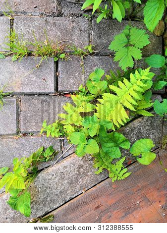Mos On Brick Wall Texture. Green Plant And Mos Growing On The Brick Wall Hexagon Shape. Moss Texture