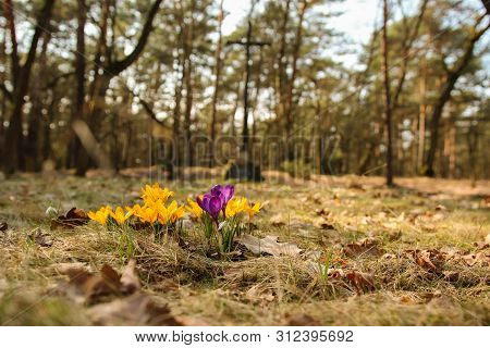 A Beautifully Blooming Sash In A Forest Glade