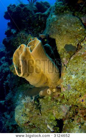 Colorful Sponge growing off a Cayman Brac Wall poster